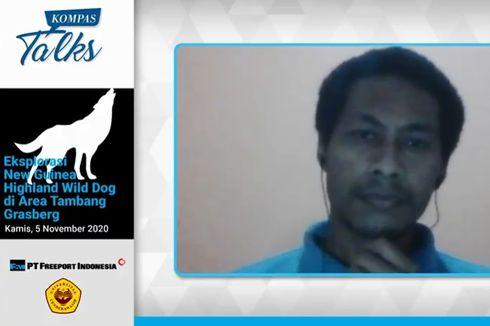 Peneliti Uncen: 200-300 Ekor Singing Dog Sedang Dikonservasi