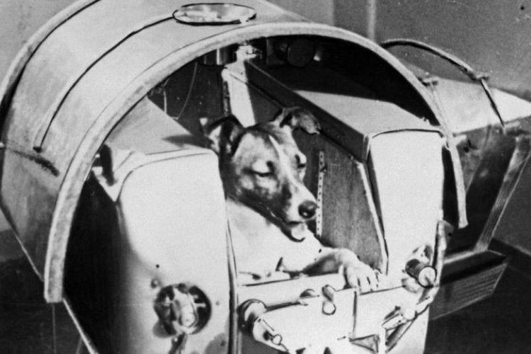 Uni Soviet meluncurkan misi luar angkasa dengan mengirimkan Laika, seekor anjing yang menjadi hewan pertama mengorbit Bumi. (AFP)