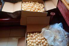 Ribuan Telur Penyu Selundupan Disamarkan di Kardus Produk Kecantikan