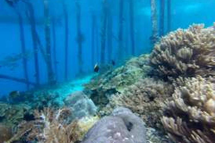 Pemandangan bawah laut di sekitar Dermaga Desa Yenbuba, Distrik Meos Mansar, Kabupaten Raja Ampat, Papua Barat, Minggu (30/10/2016).