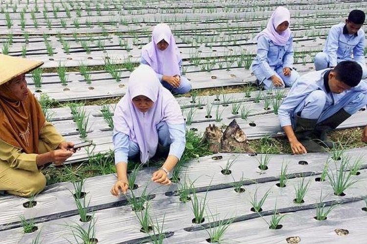 Calon petani dan penyuluh pertanian di Sekolah Menengah Kejuruan Pertanian Pembangunan, Kabupaten Batanghari, Jambi, Senin (10/10/2016), praktik di lapangan menanam bawang.