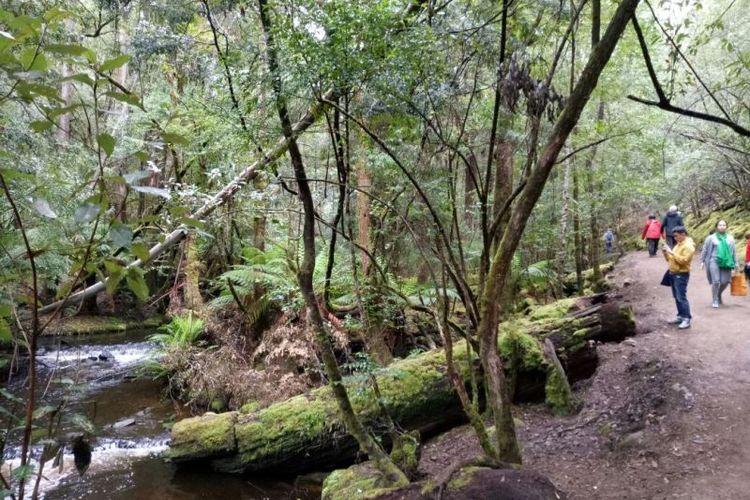 Jalan setapak dan aliran sungai Tyenna menjadi teman para pengunjung Taman Nasional Mount Field yang akan menuju ke beberapa air terjun di dalam tempat itu.