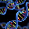 Gen: Pengertian, Fungsi, dan Simbol-Simbolnya