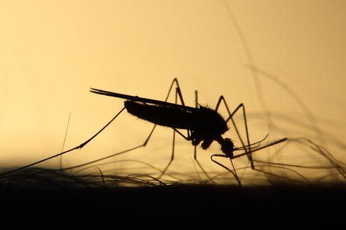 Praktis dan Mudah, Ini 5 Cara Mengusir Nyamuk di Kamar