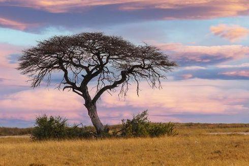 Era Kolonial di Afrika Selatan Tunjukkan Fenomena Tanaman Sebabkan Kerusakan