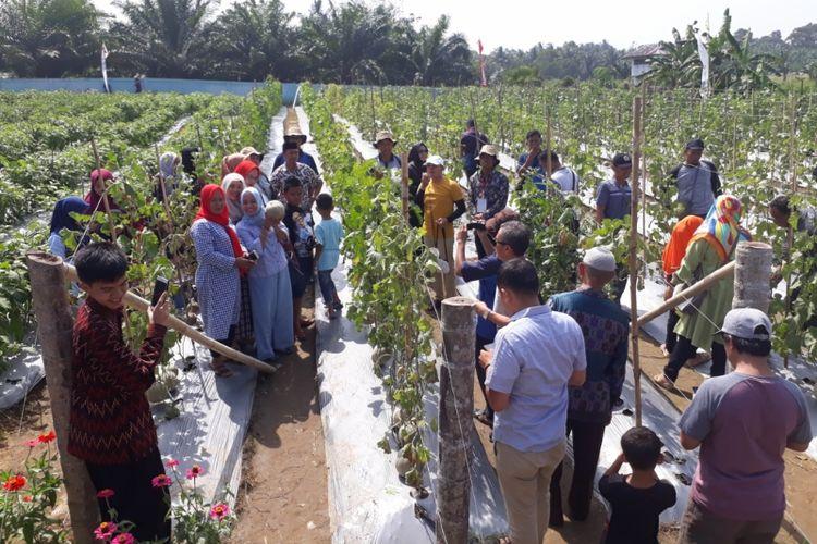 Plt. Bupati Bengkulu Selatan Gusnan Mulyadi dan isteri bersama pengunjung memetik buah melon