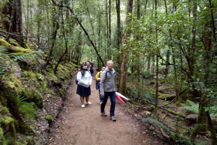 Para wisatawan menyusuri jalan setapak yang membelah hutan untuk mencapai ke air terjun Russell Falls.