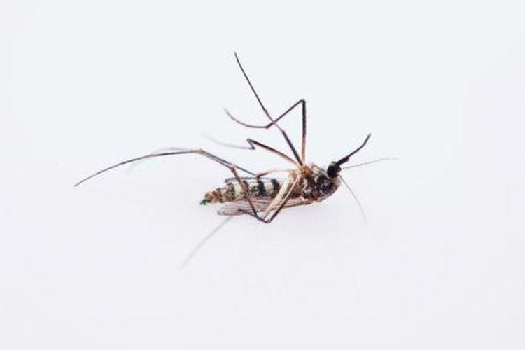 Ilustrasi nyamuk