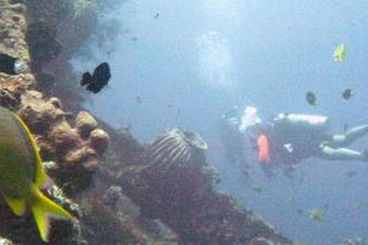 Penyelam menikmati ekosistem bawah laut di bangkai kapal perang USS Liberty yang karam dihantam torpedo Jepang di perairan Tulamben, Karangasem, Bali, Sabtu (5/10/2013).