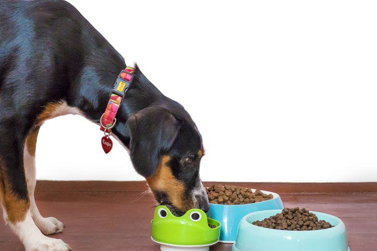 Ilustrasi anjing sedang makan.