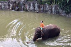 Wabah Covid-19, BKSDA Pantau Kondisi Satwa Kebun Binatang di Seluruh Bali