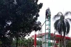Diduga Depresi, Seorang Pria Panjat Tiang Reklame di Bintaro, Tangsel