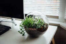 4 Cara Mudah Membuat Terrarium, Solusi Praktis Merawat Tanaman