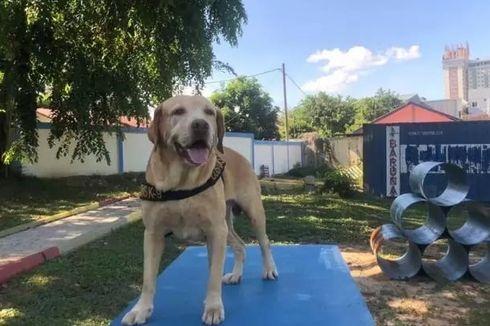 Mengenal Andro, Anjing Pelacak yang Gagalkan Penyelundupan 17 Kg Sabu