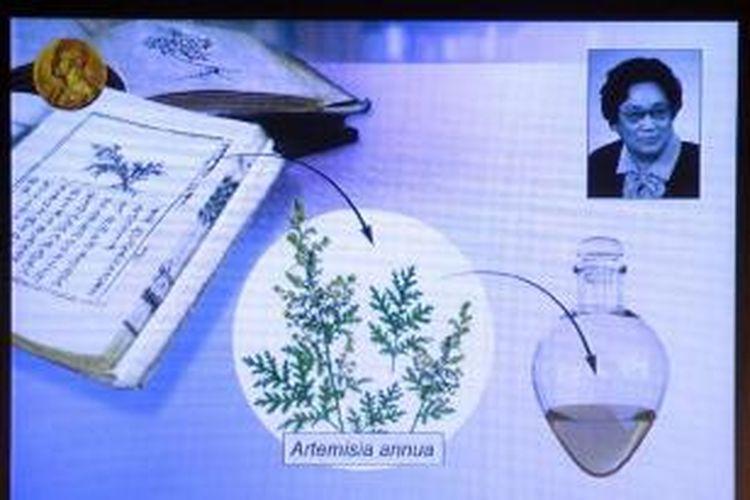 Tu Youyou mendapat Nobel bidang kedokteran atas pengembangan herbal yang mampu mengatasi penyakit malaria.