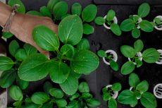 5 Hal yang Tidak Boleh Dilakukan Saat Berkebun Hidroponik