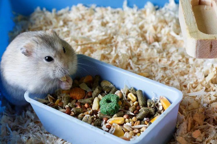 Ingin Pelihara Hamster? Jangan Asal Pilih Kandang Halaman all - Kompas.com