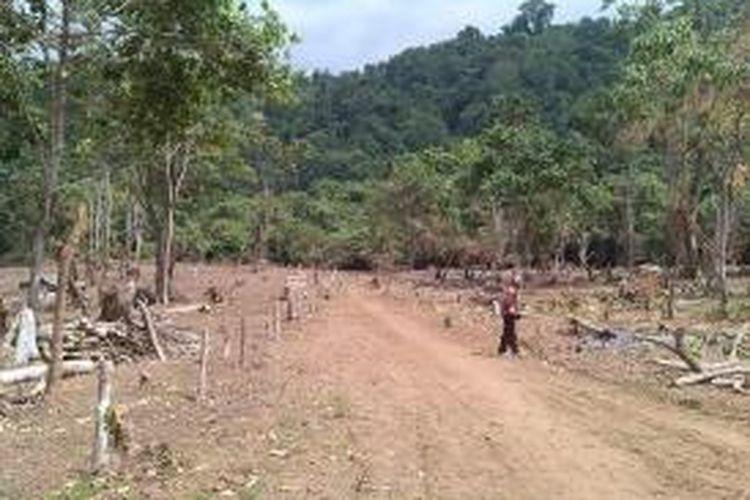 Kondisi kawasan Taman Nasional Gunung Rinjani.