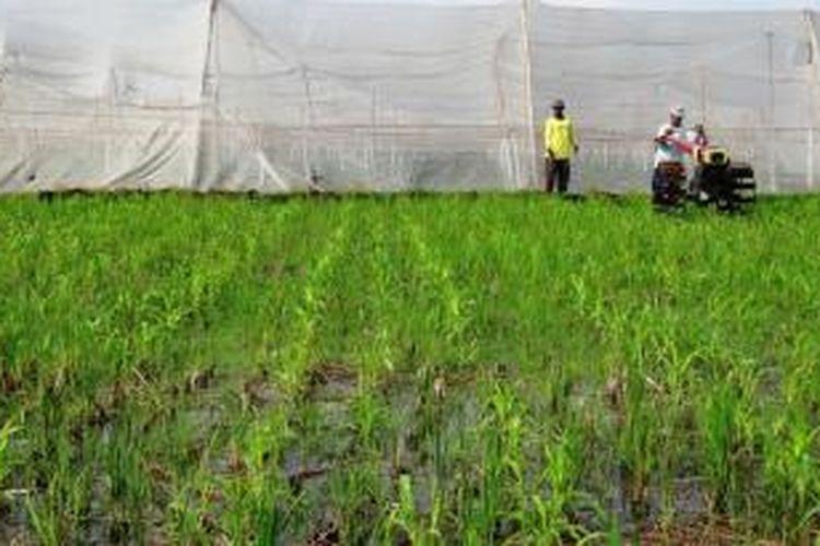 Di Kabupaten Jember, Jawa Timur, banyak lahan pertanian produktif beralih fungsi menjadi perumahan dan pergudangan.