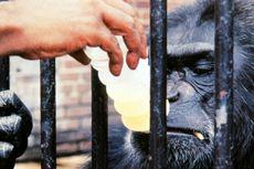 NASA Diduga Suntik Mati 27 Monyet di Pusat Penelitiannya