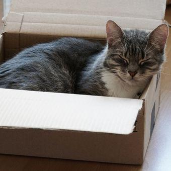 Kucing mencari tempat sempit seperti kardus untuk tidur karena merasa dirinya akan aman.