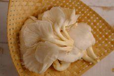 Cara Simpan Jamur Tiram agar Tidak Cepat Busuk