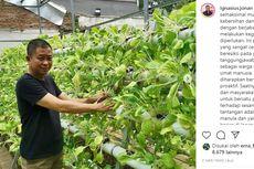 WFH Ala Jonan: Bertani Sayur Mayur Hidroponik di Rumah