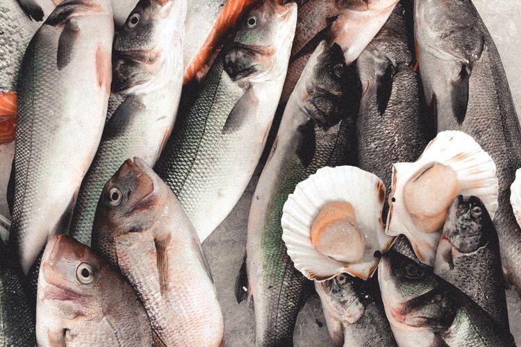 Ilustrasi ikan segar, siap untuk diolah.