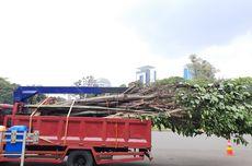 Anggaran Relokasi dan Penggantian Pohon Terkena Proyek MRT Jakarta Sebesar Rp 4 Miliar