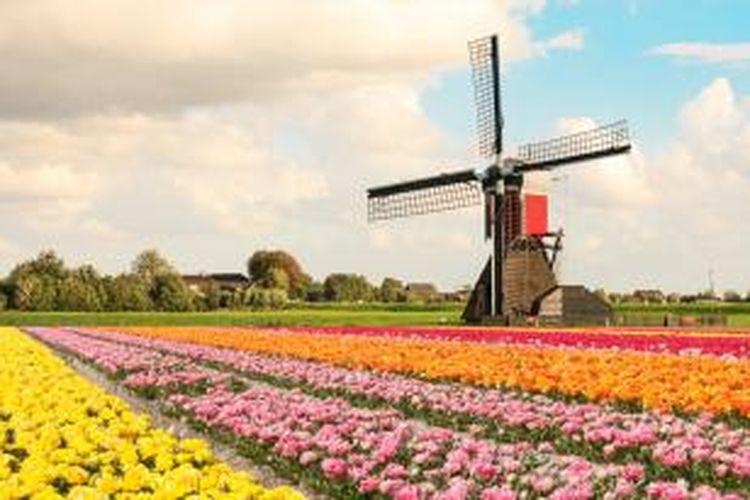Musim semi menjadi musim paling ditunggu-tunggu. Musim ini hadir pada Maret hingga Mei. Pada saat inilah bunga-bunga tulip akan bermekaran. Semua orang dapat menikmati indahnya kebun tulip, terutama di Keukenhof, Lisse.
