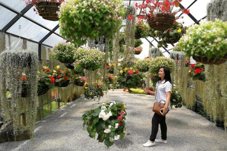 Salah seorang wisatawan Indonesia berfoto di rumah kaca Doi Tung Garden, Chiang Rai, Thailand. Di sini memang banyak sekali spot yang cantik untuk dijadikan latar belakang foto.