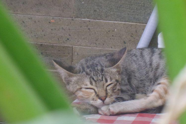 Ilustrasi kucing tidur.