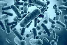 Tak Perlu Selalu Musuhi Bakteri