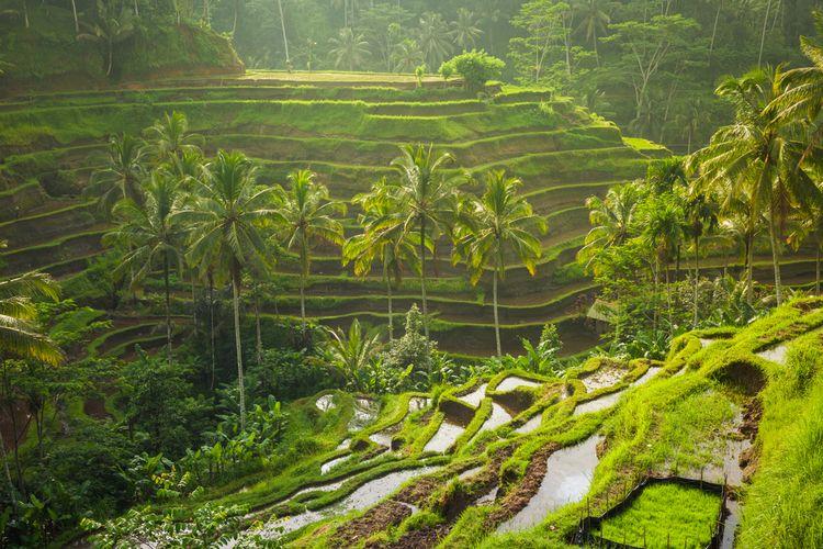 Tegallalang Rice Terrace di Bali.