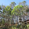 Lawu Park Tawangmangu Buka Kembali, Jumlah Pengunjung Dibatasi