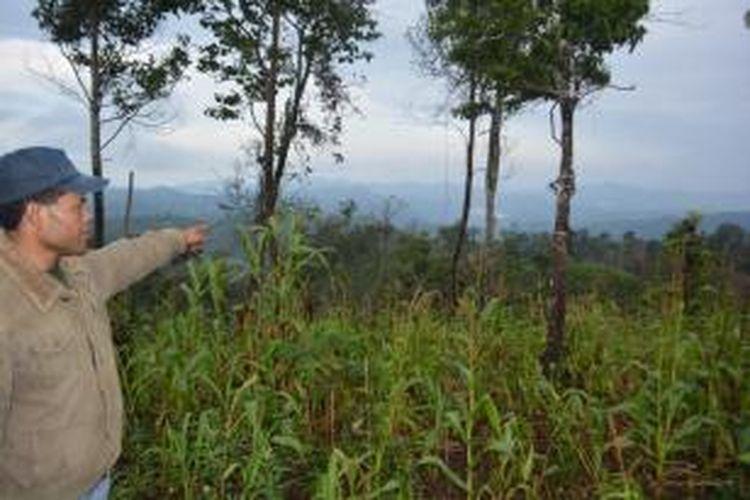 Warga masyarakat disekitar kawasan hutan konservasi wilayah II yang meliputi Kecamatan Pocoranaka, Pocoranaka Timur dan Wae Rii, tepatnya di sekitar Desa Ngkiong Ndora, Rabu (4/3/2015) merambah hutan konservasi dengan menanami jagung dan berbagai jenis tanaman holtikultura. BKSDA II Ruteng melarang warga untuk tidak merambah dan menebang kayu, namun, warga tidak menghiraukan larangan tersebut. (kompas.com/Markus Makur)