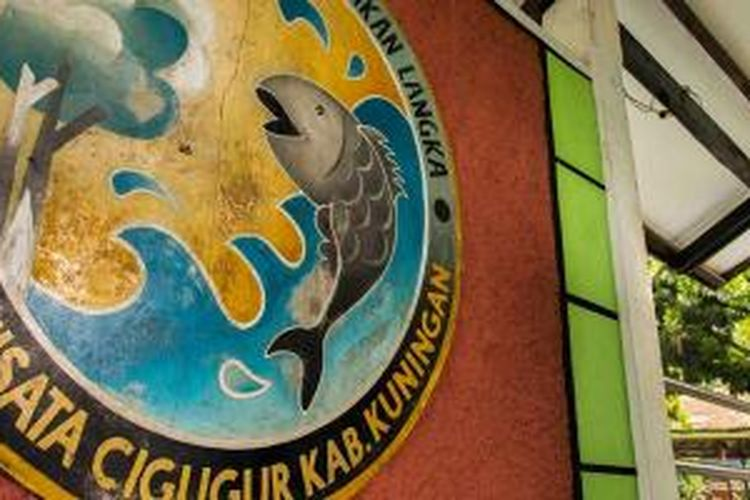 Obyek wisata Ikan Dewa di Cigugur, Kabupaten Kuningan, Jawa Barat.
