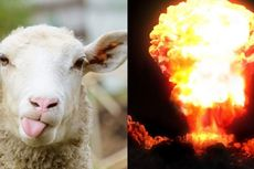 Temuan Domba Terpapar Radiasi Perkuat Dugaan Israel Uji Coba Nuklir
