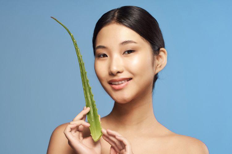 Cara terbaik menggunakan lidah buaya untuk rambut adalah gel mentah dari tanamannya langsung.