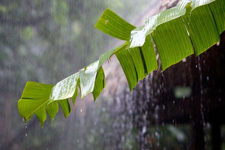 Ilustrasi hujan lebat di daerah tropis.