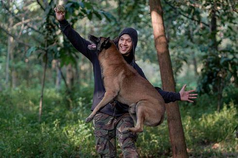Belajar dari Kasus Bima Aryo, Cara agar Tidak Digigit saat Bertemu Anjing Besar