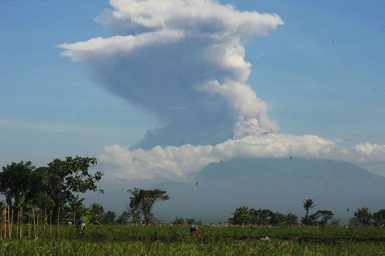 Erupsi Gunung Merapi terlihat dari Sawit, Boyolali, Jawa Tengah, Minggu (21/6/2020). Berdasarkan data pengamatan Balai Penyelidikan dan Pengembangan Teknologi Kebencanaan Geologi (BPPTKG), terjadi erupsi Gunung Merapi pada pukul 09.13 WIB dengan aplitudo 75 mm, durasi 328 detik dan tinggi kolom erupsi kurang lebih 6.000 meter dari puncak.