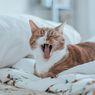 Penyebab dan Cara Mengatasi Bau Mulut pada Kucing