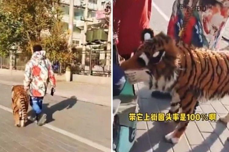 Foto kolase yang memperlihatkan anjing dicat loreng agar menyerupai harimau di China.(Zhangye Daily via Daily Mail)