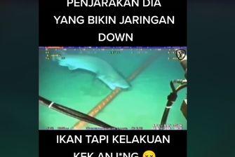 Viral, Video Ikan Hiu Gigit Kabel Bawah Laut Sebabkan Indihome dan Telkomsel Gangguan, Benarkah?