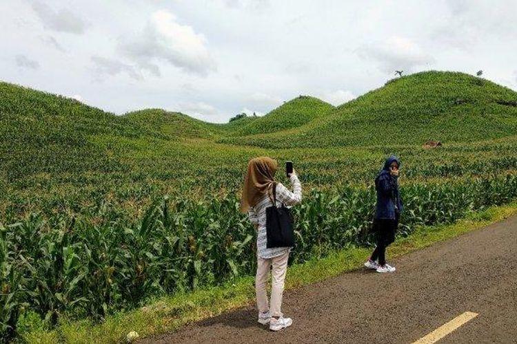 Bukit Teletubies di Gunungkidul, Yogyakarta.