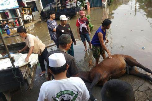 Diduga Kelelahan Terobos Banjir, Kusir Pingsan dan Kudanya Mati