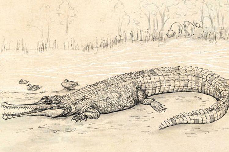Gunggamarandu maunala, spesies baru buaya raksasa yang ditemukan di Australia. Dengan panjang 7 meter, reptil ini pernah menjelajahi Bumi di zaman prasejarah.