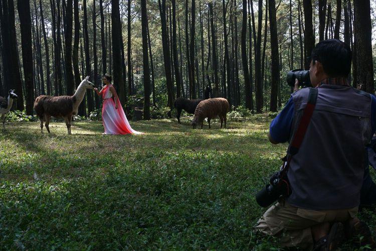Para fotografer saat memotret satwa di Taman Safari Prigen Kabupaten Pasuruan