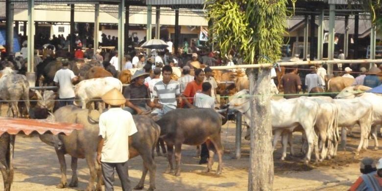 Aktivitas di pasar hewan Ambarawa, Kabupaten Semarang.